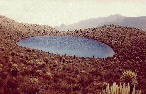 Laguna Alta (Junio, 1996)