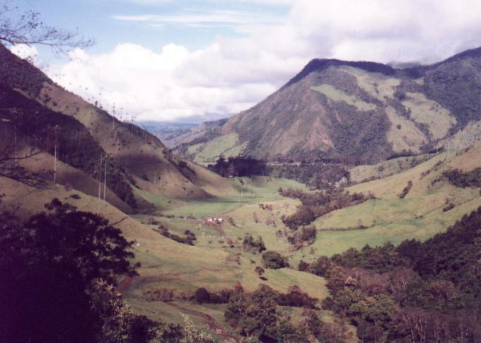 Valle de Cocora (Enero, 1999)