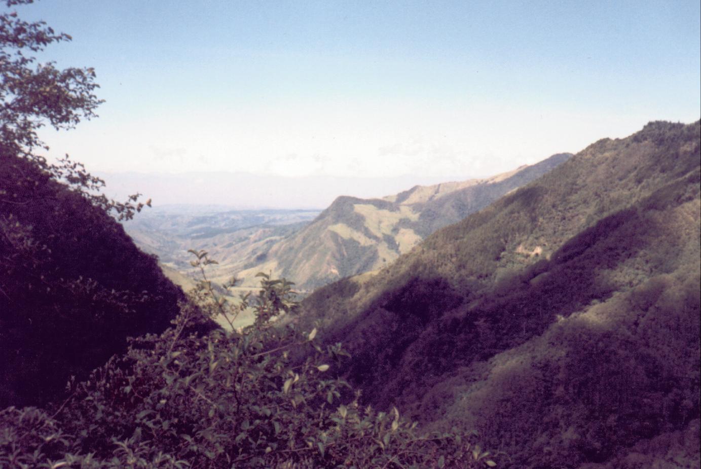 Valle de Cocora (Julio, 1998)